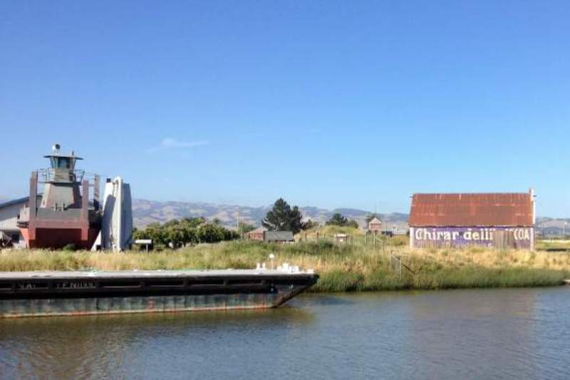 Dolphin Charter Cruises on the Petaluma River