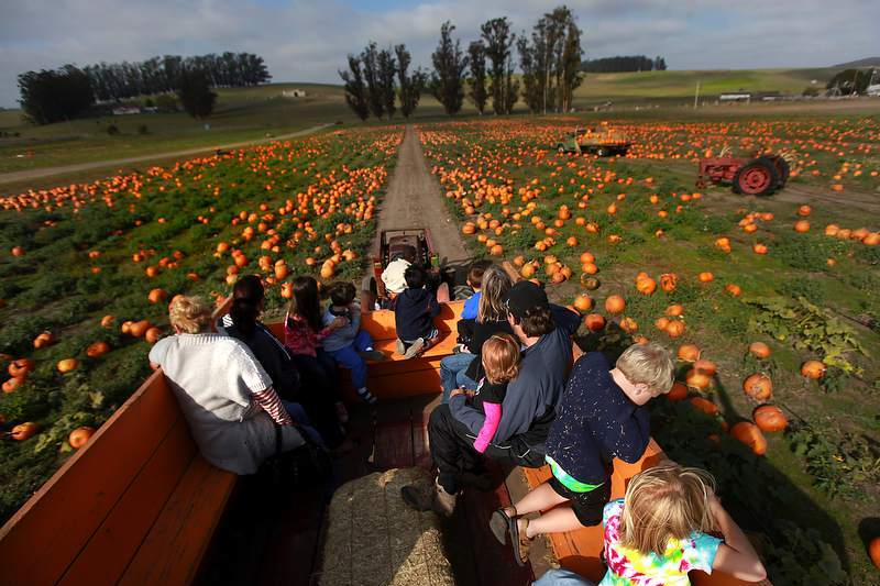 Peter Pumpkin Patch at Spring Hill Jersey Cheese